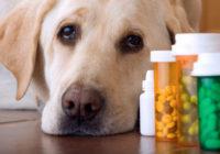 Препараты от блох и клещей