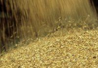 О нарушении законодательства РФ в области хранения, закупки и использования зерна
