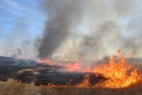 На полях пшеница от огня искрится