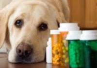 О возобновлении обращения лекарственных препаратов  для ветеринарного применения