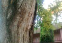 По ул. Шаляпина старые деревья заменили молодыми