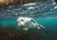 В Кисловодске открылась выставка подводной фотографии