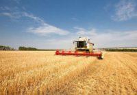 Намолот зерна на Ставрополье превысил десять миллионов тонн