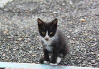 Спасатели Ставропольского края освободили животное