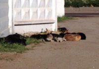 Приют для животных в Кисловодске уже построили