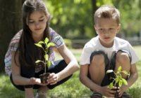 Кисловодчане поборются за звание самых заботливых экологов