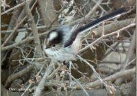 1 апреля отмечается международный день птиц