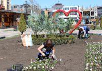 В Кисловодске на клумбы высадили первые цветы
