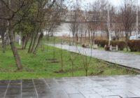 В Кисловодске названы благотворители зеленого наряда города