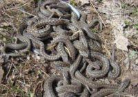 В Кисловодске искали змей у детского сада
