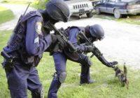 Агрессивный котенок вновь терроризировал кисловодчан