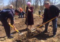 Лес Победы появился в Кисловодске