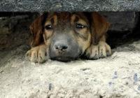 В Ессентуках возмущены жестоким отстрелом собак