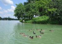 Сеансы релаксации на ессентукском озере проводят кряквы