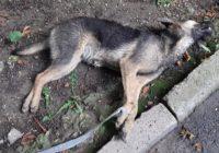 В Кисловодске убили двух щенков