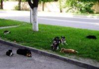 В Ессентуках растет число бродячих собак