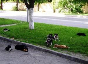бродячих собак