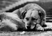 "В центре Кисловодска разъяренная женщина ""охотилась"" на собаку"