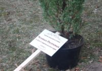 10 многодетных семей заложили аллею Семейное древо жизни