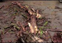 В Кисловодске от ветра падают деревья