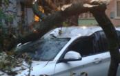 На Ставрополье от ветра падают деревья и сносит крыши