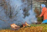В столице СКФО вводятся штрафы за сжигание листвы