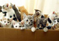 В Ессентуках организуют раздачу бездомных животных