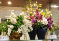 Диалог цветов в Ессентукском музее