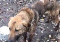 Охранник пятигорского зоопарка избил пса металлическим прутом