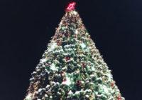 Новогодняя ель из Ессентуков – самая красивая в крае