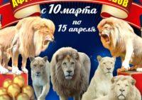 На манеже кисловодского цирка Африканские белые львы!