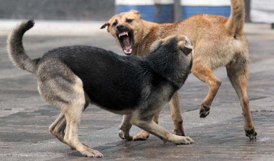 собак