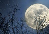 Необычно! Позирует … Луна