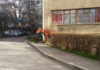 Лошадей в Кисловодске становится все больше