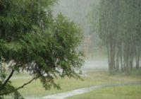 Синоптики прогнозируют ливневые дожди и сильный ветер