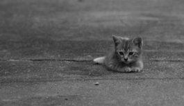 Недалеко от Ессентуков жители выбрасывают котят и щенят