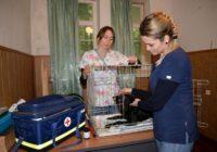 Волонтеры из Москвы заботятся о бродячих животных в Ессентуках