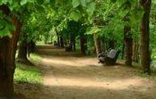 Об эпидситуации в Кисловодске на 15 мая и открытии парка