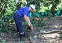 Спасатели Кисловодска подготовили к вывозу 65 сломанных деревьев