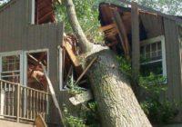 В Кисловодске ветер повалил деревья на крыши домов