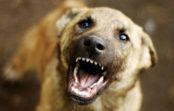 СКР проведет проверку по факту нападения бродячих собак