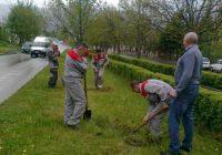 Полтысячи деревьев и кустов пополнили зеленый фонд Кисловодска