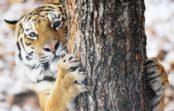 Московский передвижной зоопарк сафари