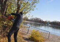 На ессентукском озере избавятся от аварийных деревьев