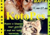 Благотворительная выставка Котопес пройдет в Ессентуках