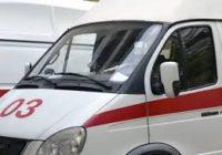 Собаку, сбитую машиной, волонтеры  госптализировали в Ставрополь