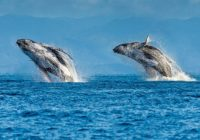 Tourboss приглашает 28 сентября на фестиваль китов