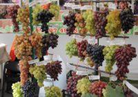 Форум Молодое вино пройдет в Кисловодске