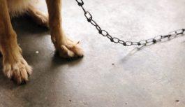 Ессентучанин натравил собаку на своих гостей
