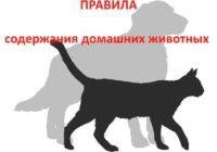 О содержании животных на территории г. Кисловодска